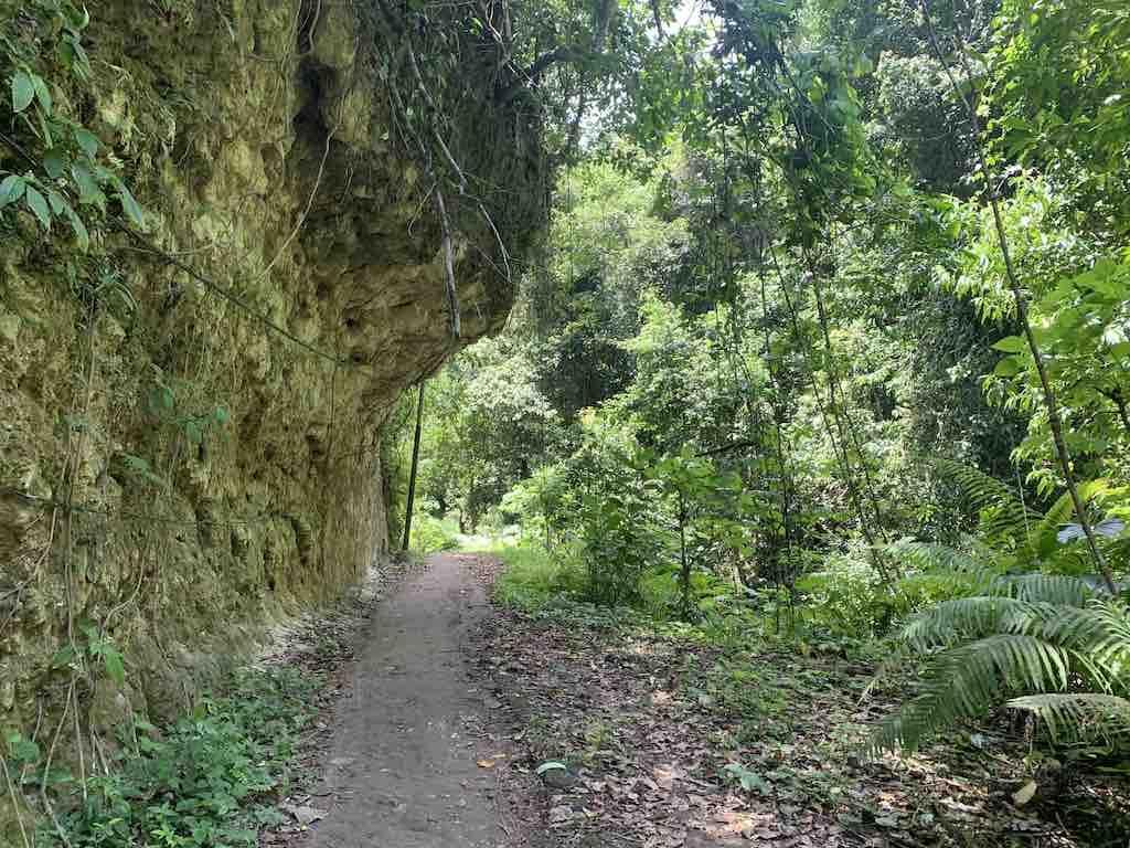 Foret primaire Tembeling Temeling Nusa Penida Bali