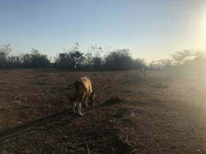 Nusa Penida aller de Crystal Bay à broken Beach à pied vaches