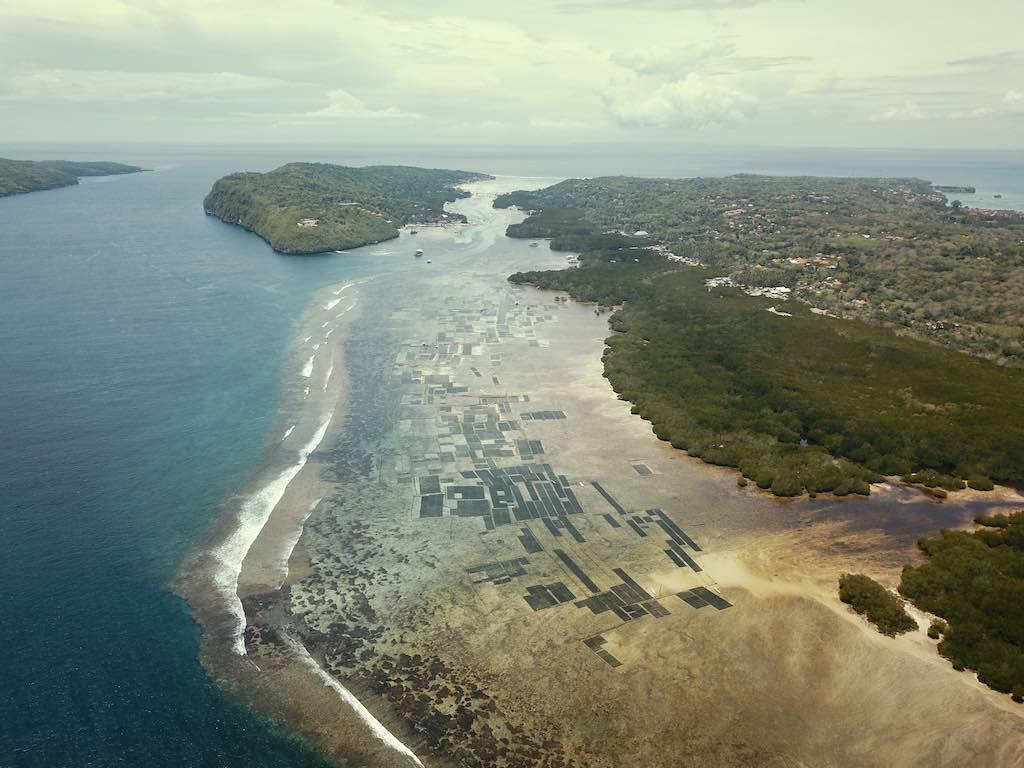 Nusa Ceningan Nusa Lembongan Algues Bali