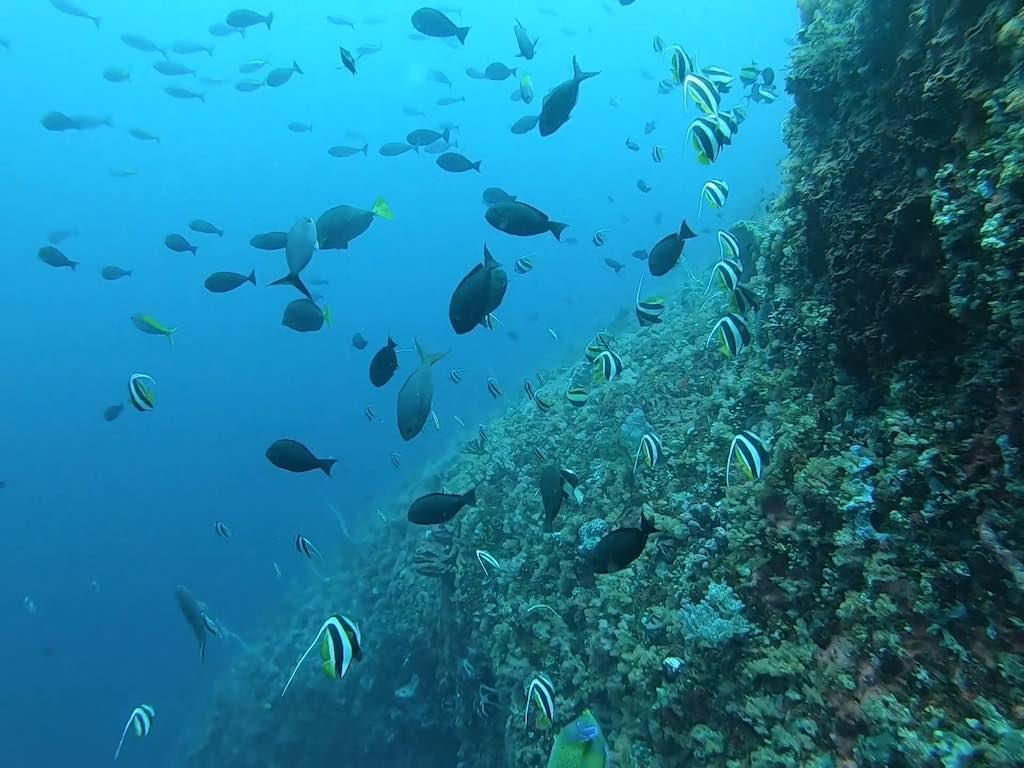 plongée sous-marine à Nusa Penida Bali